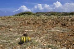 Vulkaniskt landskap med kaktuns Arkivfoton