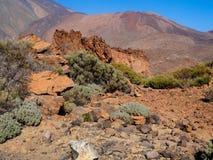 Vulkaniskt landskap och vegetation på Tenerife Arkivfoto