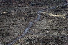 Vulkaniskt lavalandskap Lanzarote med folk på en bana Arkivbild