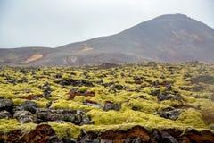 Vulkaniskt mossalandskap med vulkan i bakgrund royaltyfri bild