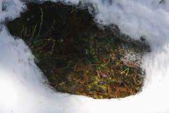 Vulklei in bos in begin van de lente Stock Afbeelding