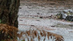 Vulklei die zich op weg dichtbij bosrand in de winter vormen stock footage