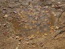 vulklei van regenwater en modder stock fotografie