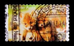 Vulpesvulpesen för den röda räven, behandla som ett barn djurserie, circa 2014 Arkivfoton