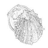 Vult de hand getrokken oester met overzicht en Overzees voedsel Royalty-vrije Stock Afbeeldingen