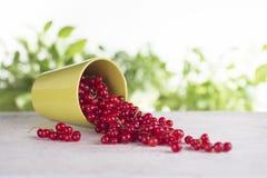 Vulten kopp med den röda vinbäret Royaltyfri Foto
