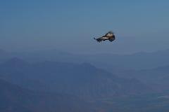 vultur för gryphus för andean condor latinsk name Royaltyfri Foto