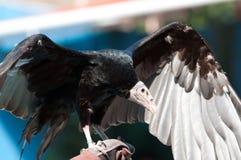 A vulture Stock Photos