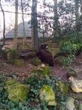 vulture imagens de stock
