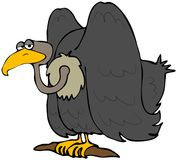 Vulture. This illustration depicts a comical vulture Royalty Free Stock Photos