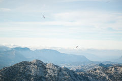 Vulture above mountains Stock Photo