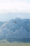 Vulture above mountains Royalty Free Stock Photography