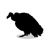 Vulture bird black silhouette animal Royalty Free Stock Image