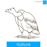 Vulture bird learn birds coloring book vector Stock Photo