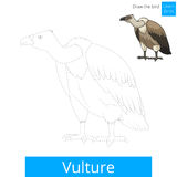 Vulture bird learn to draw vector. Vulture learn birds educational game learn to draw vector illustration Stock Photo