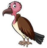 Vulture bird on white background Royalty Free Stock Photo