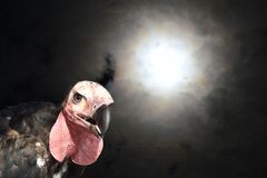 Vulture in the dark nightmare. royalty free stock photography