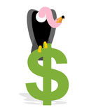 Vulture and Dollar. Condor, Griffon and sign of money. Scavenger Royalty Free Stock Photo