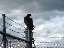 Vulture on a fencepost Stock Photography