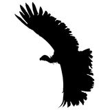 Vulture Flying - Vector Image Stock Image