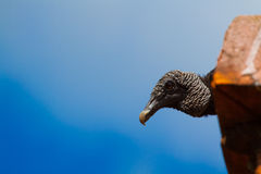 Vulture Ledge. A vulture peaking over a ledge Royalty Free Stock Images
