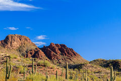 Vulture Peak, in Arizona's Sonoran desert. Giant Saguaro cactus dot the landscape leading to the rugged, rocky outcrop of Vulture Peak, Arizona Stock Image