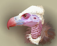 Vulture portrait - illustration Stock Image