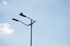 Vulture resting on light post Royalty Free Stock Image