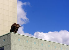 Vulture on a roof Stock Image