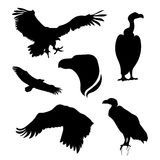 Vulture set vector Stock Images