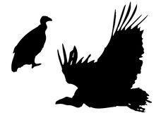 Vulture silhouettes Royalty Free Stock Image