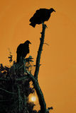 Vulture Silhouettes Stock Image