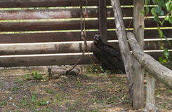 The vulture sits on the ground. In an enclosure Stock Photos