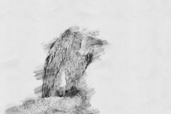 Vulture. Sketch with pencil Stock Photo