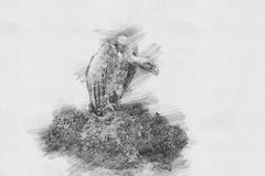 Vulture. Sketch with pencil Royalty Free Stock Images
