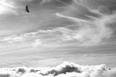 Vulture on sky Royalty Free Stock Photography