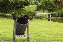 Vulture on Trash Can Stock Photos
