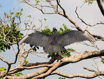 Vulture on a tree Stock Photos