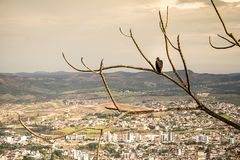 A Vulture. The Vulture view from the city Royalty Free Stock Image