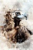 Vulture - watercolor illustration portrait royalty free stock photos