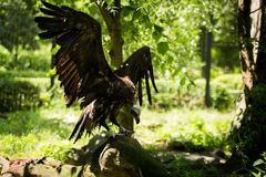 Vulture. In wild life.  with spread wings Stock Photography
