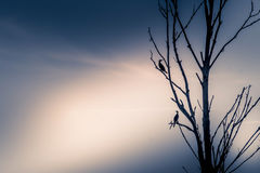 Vultures. In a beautiful sunrise Royalty Free Stock Photos