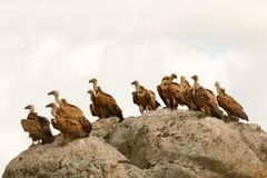 Vultures on a big rock with the cloudy sky Royalty Free Stock Image
