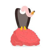 Vultures and brain. Griffon bite mind. Condor  Royalty Free Stock Photos