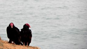 Vultures. On cliffs with the sea Royalty Free Stock Images