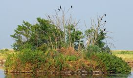 Vultures and crows in the uninhabited island 2 Royalty Free Stock Image