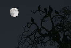 Vultures and a Full Moon stock photos