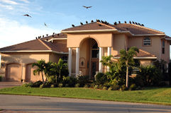 Vultures on house (foreclosure). A group of vultures on and circling a new house symbolizing foreclosure Stock Photos