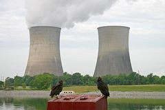 Vultures & Nuclear Power Station Royalty Free Stock Photos