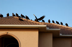 Vultures On Rooftop Royalty Free Stock Photos